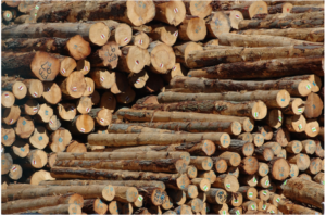 Lyttleton logs